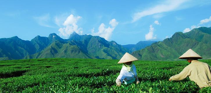 Quand visiter le Vietnam ?