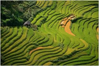 Mu Cang Chai Tu Le Paysages Nord Vietnam en Novembre