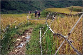 Bac Ha Vietnam Nord en Novembre