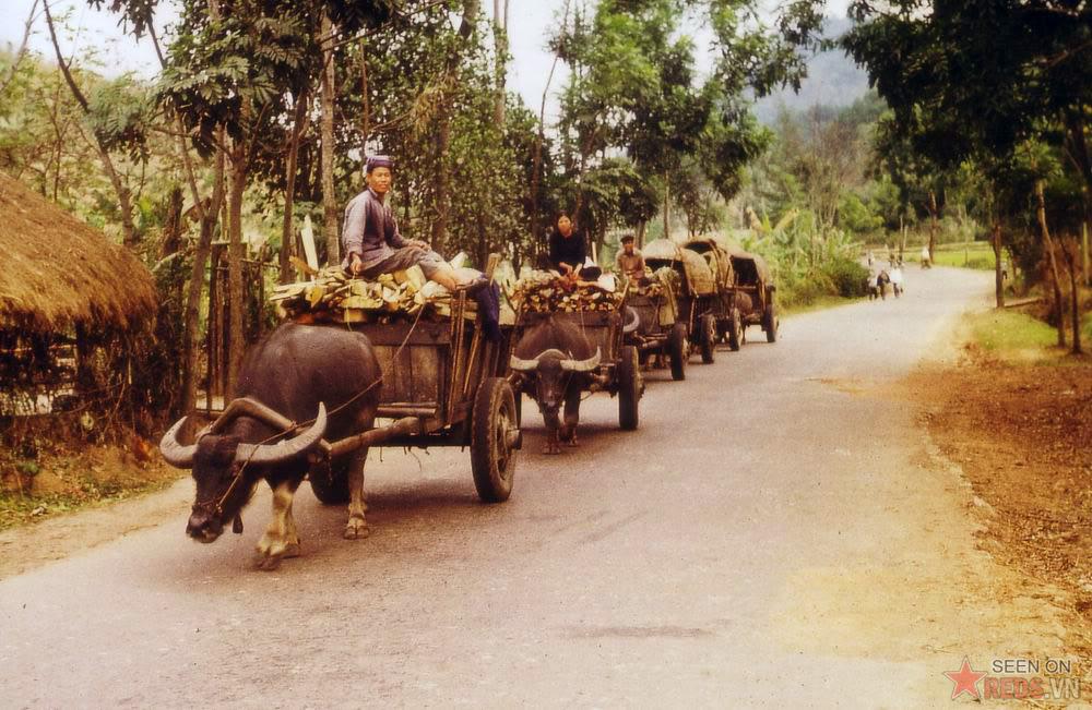 Charettes Au Nord Vietnam
