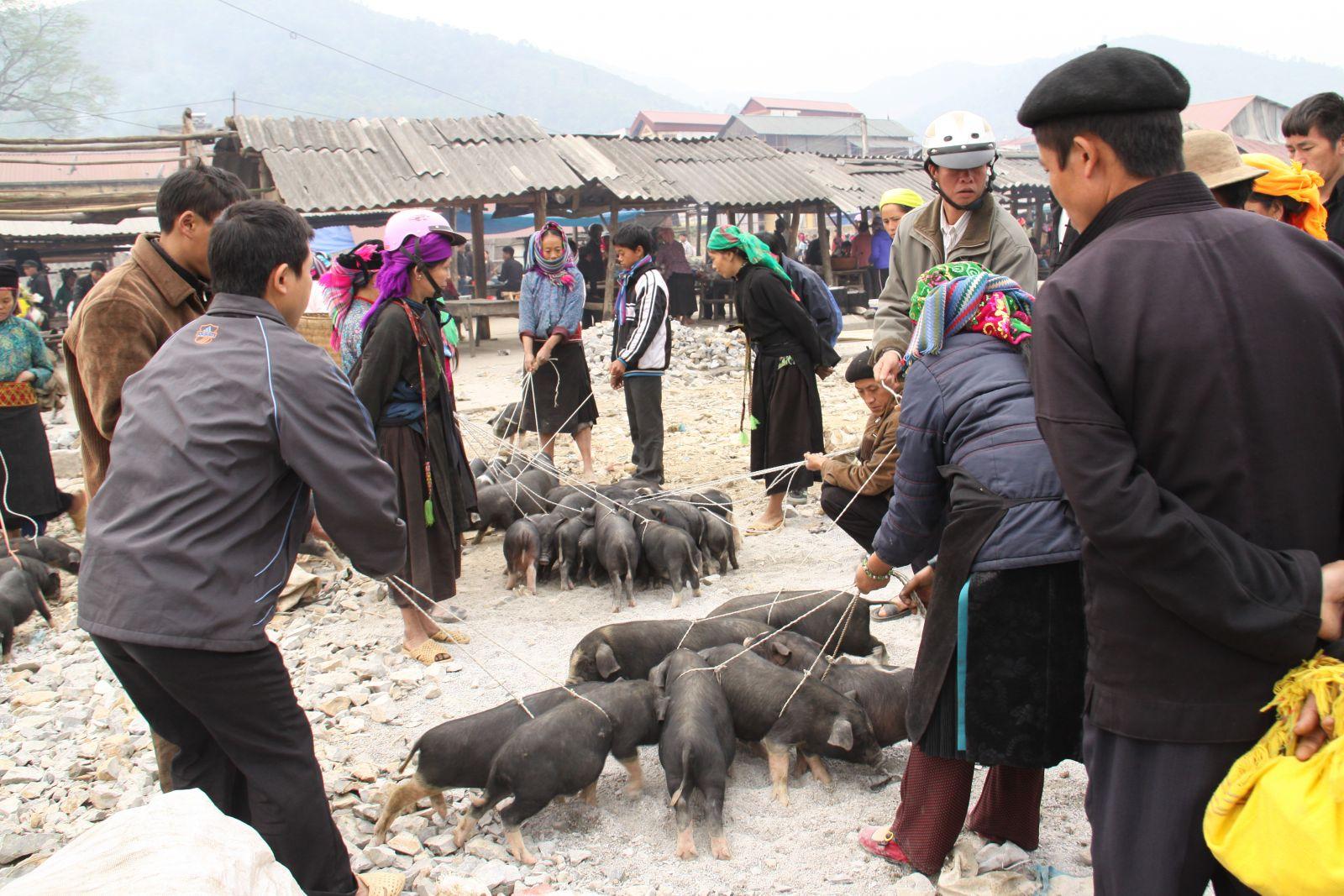 Cochons a vendre Marché Hoang Su Phi Ha Giang