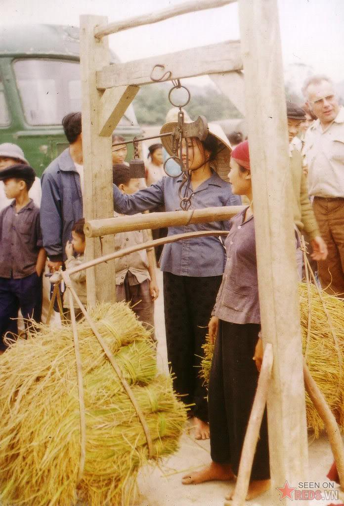Collection de riz Nord Vietnam