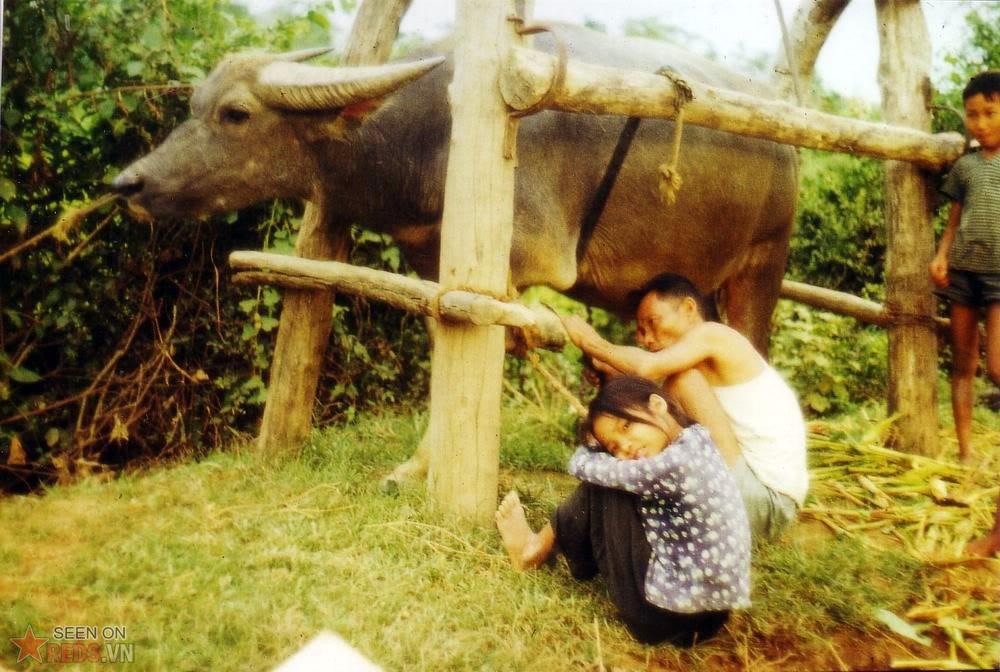Construction de l'etable Nord Vietnam