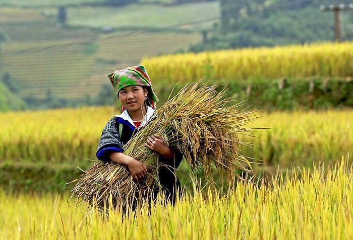 Hmong-girl-in-Mu-Cang-Chai-Yen-Bai-Vietnam