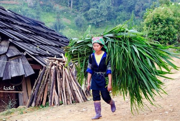 Les Hmong de Mucangchai