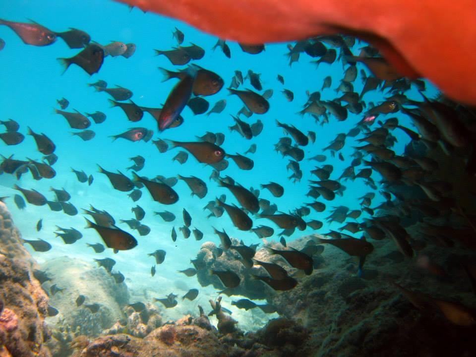 Ho Trau Nam, île de la Baleine